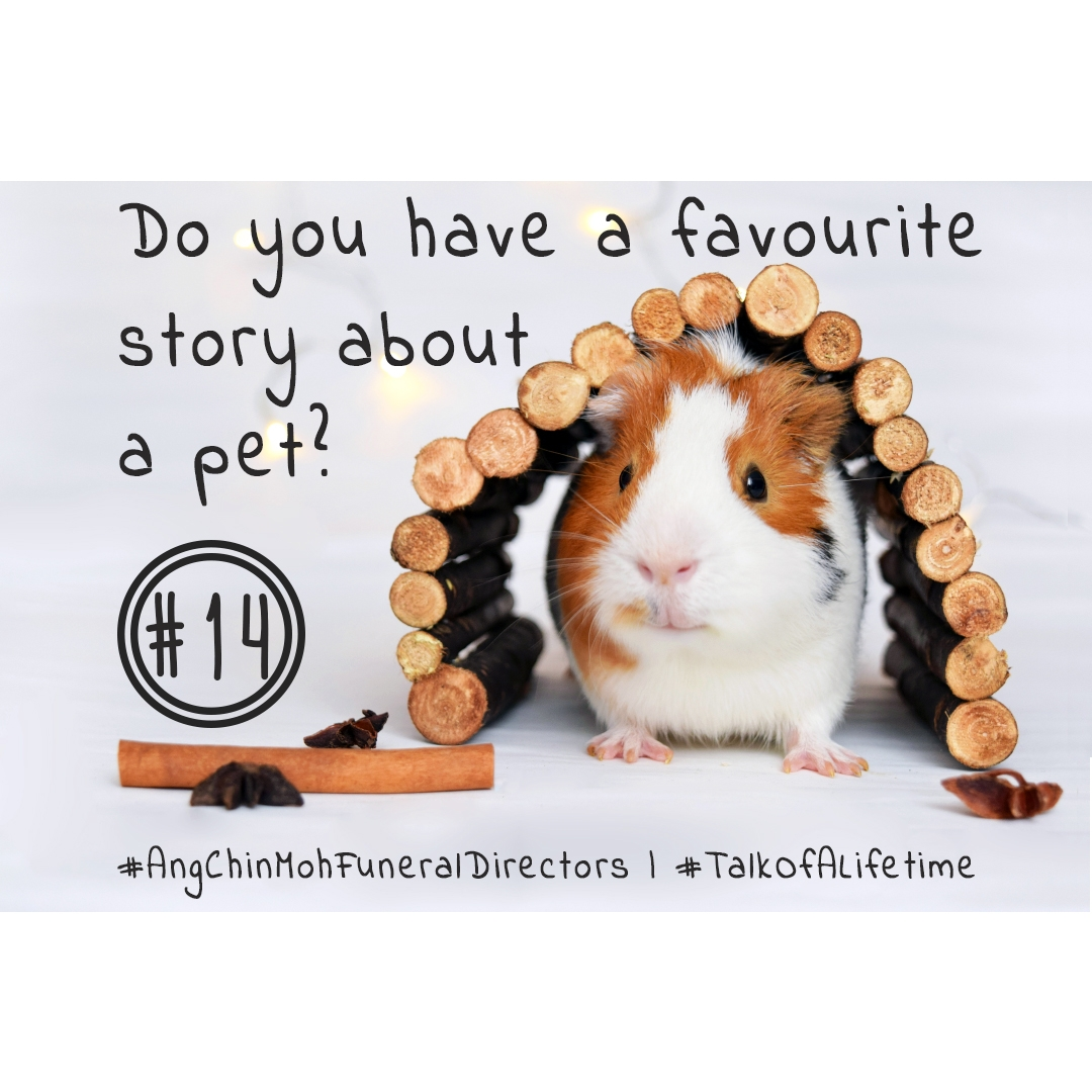 Do you have a favourite story about a pet?